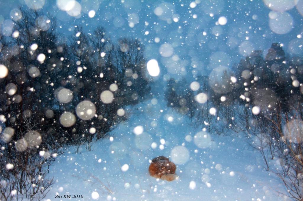 ny snø