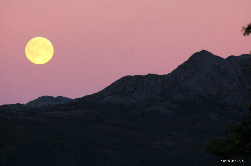 Månen og Duggurdsknappen